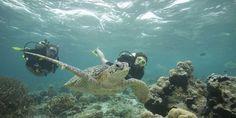 Lombok, Scuba Diving, Animals, Diving, Animales, Animaux, Animal, Animais
