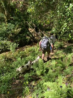 There are lots of walks within walking distance of Andrewshayes that dogs and children will enjoy. Our onsite wardens can advise. Dog Friendly Holidays, South West Coast Path, Jurassic Coast, Pet Dogs, Pets, Dog Walking, Dog Friends, Devon, Great Places