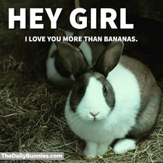OMG that is a LOT of love. #bunny #bunnies #rabbit #cuteanimals #pets