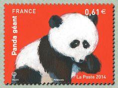 Panda Geant (Ailuropoda melanoleuca). France 2014
