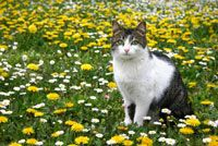 Read Heat Stroke and Hypothermia In Cats in this veterinarian-written article.