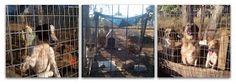 Dog Rescue Greece Nieuwsbrief: Speciale Editie: Actie Serieus Request voor Dieren
