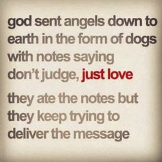 My doggies are the truest examples of unconditional love I have found in this world! Schnauzers, Dachshunds, Beagles, I Love Dogs, Puppy Love, Just Love, Just For You, Golden Retriever, Labradoodles