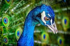 Green & Blue by socaldeals4u