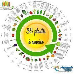Aquaponics System For You - Potager Aquaponics System, Balcony Garden, Garden Planters, Garden Trellis, Organic Gardening, Gardening Tips, Gardening Zones, Urban Gardening, Potager Bio