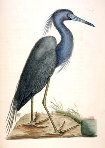 Public domain biological sketches from the National Agricultural Library.