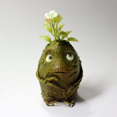 Baby Mandragora root