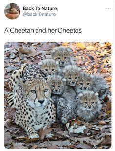 Cute Animal Memes, Animal Jokes, Cute Funny Animals, Funny Animal Pictures, Funny Cute, Cute Cats, Really Funny Memes, Stupid Funny Memes, Funny Relatable Memes