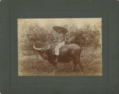 Philippines man on water buffalo bull antique ethnic photo Philippines, Buffalo Bulls, Water Buffalo, Ethnic, Photos, Black And White, The Originals, Antiques, Rice