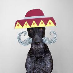 Samuel Jurcic's serious-looking dog Has an adorably goofy side. #cute