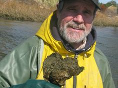NPR Audio on   Shelling Out For A Chesapeake Bay Oyster Comeback