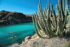kayaking in Baja - a dream of mine since 7th grade.