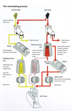 The wine making process or wine 101 Wine And Liquor, Wine And Beer, Wine Drinks, Art Du Vin, Wine Infographic, Wine Making Process, Wine Facts, Chateauneuf Du Pape, Wine Education
