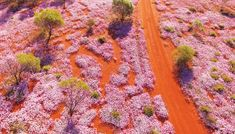 Wildflower Country – Visit Western Australia's Wildflower Country Western Australia Tourism, Kalbarri National Park, Spring Wildflowers, Kangaroo Paw, Orchid Color, Plant Projects, Kings Park, Rare Species, Growing Flowers