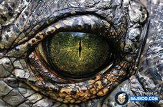 41 Extreme Close-Ups of Animal Eyes [Photo Gallery]