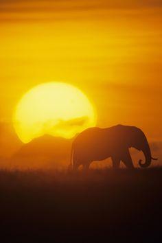 AFRICA #JetsetterCurator