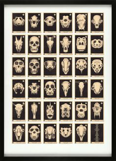 'Skulls A to Z' new print launched today. The latest in our vintage trading card series is our Skulls A to Z, a collection of 35 skulls from Alligator to Zebra and Piranha to Kangaroo. Memento Mori, Photographie Street Art, Alphabet Print, Skull Print, Animal Skulls, Irezumi, Skull And Bones, Pigment Ink, Oeuvre D'art