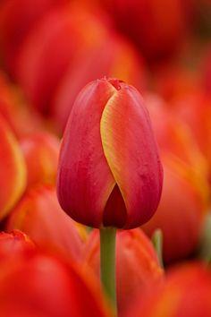 #Flowers...