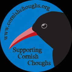 All the latest news & information on the wild choughs in Cornwall How To Build Steps, Bird Quilt, Jackdaw, Paradise On Earth, Cornwall, Patchwork Ideas, Google Search, Bobs, Childhood Memories