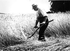 Harvesting: The hand tools used in crop harvesting were ancient in origin and underwent a slow process of evolution over a span of many centuries. By these means, a huge labour force was needed at harvest time to carry out all the separate tasks for gathe Agriculture, Process Of Evolution, Phonics Cards, Farm Images, Wheat Fields, People Of Interest, History Of Photography, Love And Lust, Vintage Farm