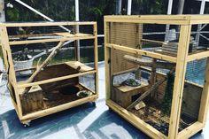 Reptile Habitat, Reptile Room, Reptile Cage, Lizard Cage, Snake Cages, Reptile Terrarium, Terrarium Diy, Vivarium, Iguana Care