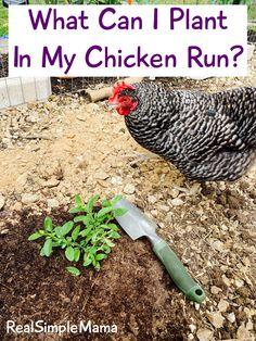 Chicken Fence, Chicken Coop Run, Diy Chicken Coop Plans, Chicken Bird, Chicken Garden, Backyard Chicken Coops, Chicken Runs, Chicken Run Ideas Diy, Chicken Coup
