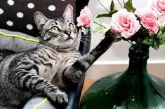 A cat sneezing is probably one of the cutest things that they do. Do you want to know why is your cat sneezing? Toxic Plants For Cats, Domestic Cat Breeds, American Shorthair Cat, Cat Hacks, Cat Care Tips, Dog Care, All About Cats, Cat Health, Beautiful Cats
