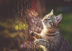 Kot, Zielone, Oczy, Ogrodzenie, Siatka, Druciana, Rozmycie