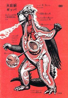 Japanese Monster anatomical cutaways