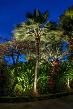 Palm Tree Landscape Lighting Maui One of our installation crews recently completed an outdoor lighting project in Maui, Hawaii. See how we illuminated this beautiful tropical vacation home. Tropical Outdoor Lighting, Tropical Landscape Lighting, Outdoor Tree Lighting, Landscape Lighting Design, Outdoor Trees, Landscape Design Plans, Lighting Ideas, Hawaii Landscape, Outdoor Lighting Landscape