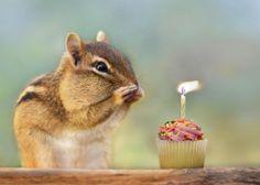 happy birthday-)