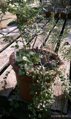 California Native Plant Container From Tree Of Life Nursery San Juan Capistrano