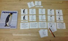 Parts of a Penguin 3-Part Nomenclature Cards and Definitions