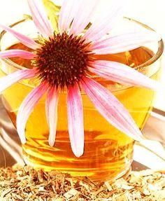 Ceai de Echinaceea – Planta Imunităţii: 7 Beneficii Miraculoase Plant