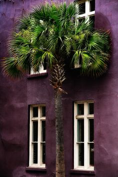 Deep purple walls and palm trees.   Stone & Living - Immobilier de prestige - Résidentiel & Investissement // Stone & Living - Prestige estate agency - Residential & Investment www.stoneandliving.com