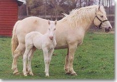 American Cream Draft Horse Association website.