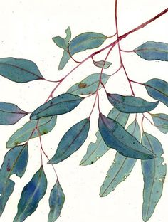 (Gum Leaves)