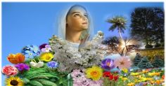 """Wandeling in de Onbevlekte tuin  van Maria :       VOLMAAKTE HEILIGHEID:       """"In de onbevlekte tuin van Maria vind je de volmaakte h..."""