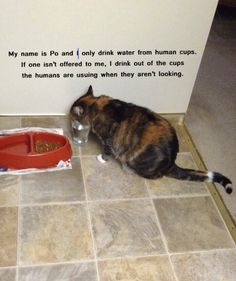 My Isabella does the same so I got her a glass water bowl. Bad Cats, Silly Cats, Cats And Kittens, Funny Animal Pictures, Funny Animals, Cute Animals, Animal Memes, Crazy Cat Lady, Crazy Cats