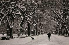 Snow day, Cynthia Matthews