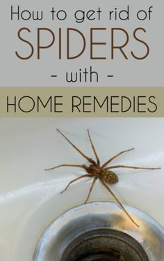 spider how to get rid and how to get on pinterest