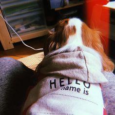 今日はポカポカですな☀︎ #弟 #キャバリア#cavalier #キャバリアキングチャールズスパニエル #ブレンハイム#blenheim #トニー #わんわん物語 #ディズニー#disney #愛犬#petdog #看板犬#signboarddog  #instadog#dog