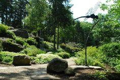 rock garden at coastal maine botanical gardens dragonfly