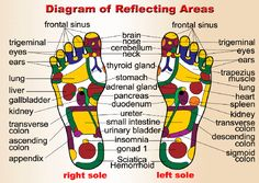 Chinese medicine, reflecting areas, feet TCM