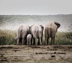 I took this is in South Africa (where I am from originally) while on safari. I managed to capture this lovely moment between a family of elephants Wild Elephant, Elephant Family, Animal Photography, Family Photography, Cute Creatures, Elephants, South Africa, Safari, My Photos