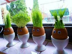 "If you love juicing wheat grass, why not try growing it in these creative ""planters"" made from egg shells. Kids Crafts, Easter Crafts, Thanksgiving Crafts, Easter Gift, Easter Decor, Egg Shell Planters, Diy Planters, Diy Niños Manualidades, Egg Shells"