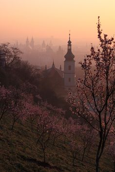 1000 images about spring in prague on pinterest prague the charles and prague czech republic for Michal turtle music from the living room
