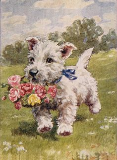 Westie Terrier Puppy with Flower Basket Vintage Reproduction Print