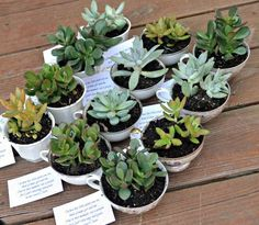 Baby Shower Favors: Teacup Succulents - One Artsy Mama