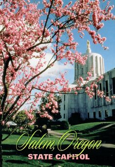 Postcard from Oregon, USA ~ Salem, Oregon ~ Cherry blossoms and the Oregon State Capitol www.postcrossing.com